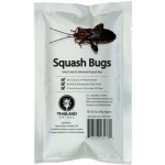 SQUASH BUGS DEHYDRATED